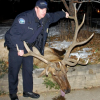 Furor over elk shooting by Boulder police